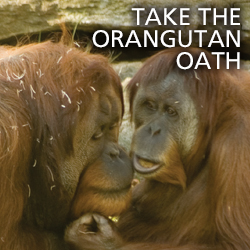 Take the Orangutan Oath